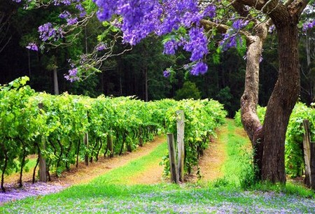 Bago Vineyards - Accommodation Cairns