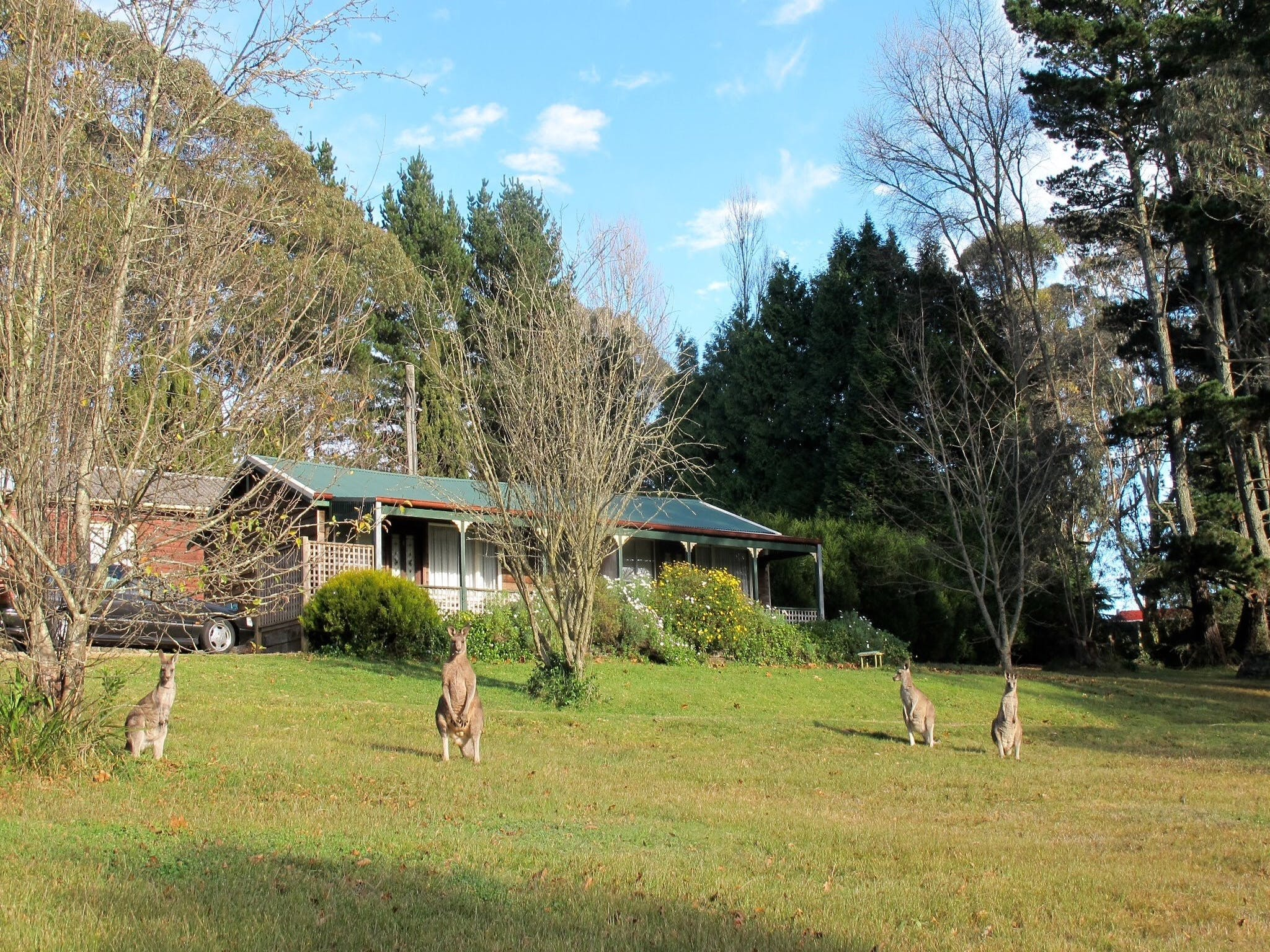 Cedar Lodge Cabins - Accommodation Cairns