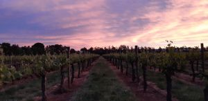 Milawa Vineyard Views - Accommodation Cairns