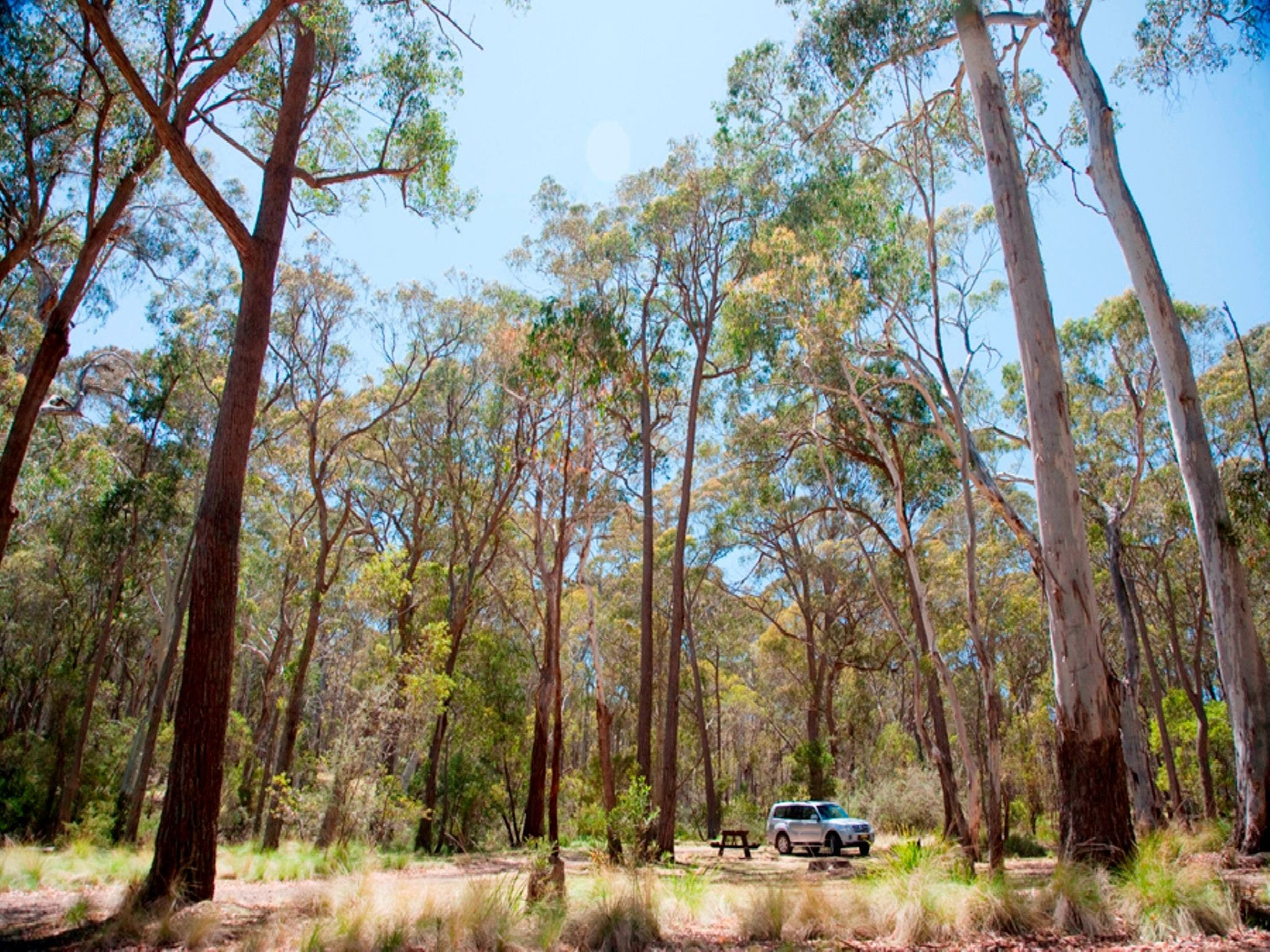 Coolah Tops National Park Camping - Accommodation Cairns
