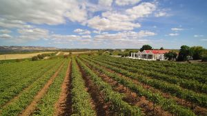 1837 Barossa Luxury Vineyard Cottages - Accommodation Cairns