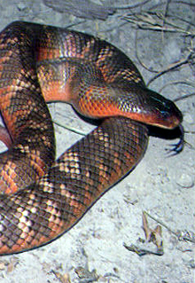 Armadale Reptile  Wildlife Centre - Accommodation Cairns