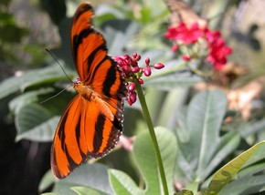 Butterfly Farm - Accommodation Cairns