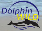 Dolphin Wild - Accommodation Cairns