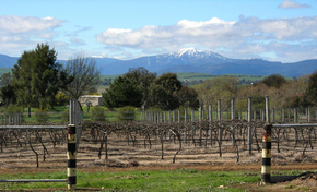 Buller View Wines - Accommodation Cairns