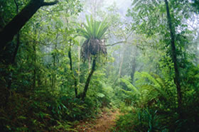 Lamington National Park and OReillys - Accommodation Cairns