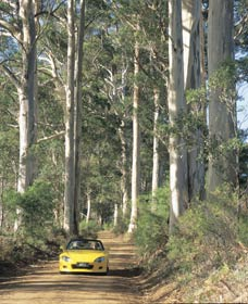 Mount Shadforth Scenic Drive - Accommodation Cairns