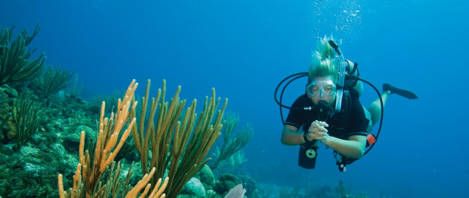 Coastal Water Dive - Accommodation Cairns
