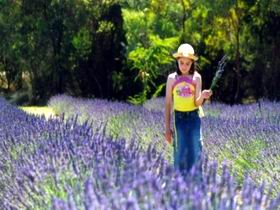Brayfield Park Lavender Farm - Accommodation Cairns