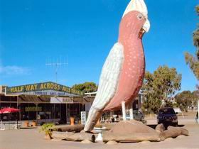 The Big Galah - Accommodation Cairns