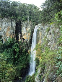 Gondwana Rainforests of Australia - Accommodation Cairns