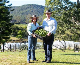 Hinterland Feijoas - Accommodation Cairns