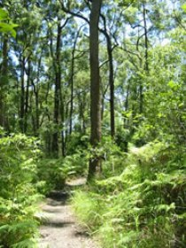 Mapleton Falls National Park - Accommodation Cairns