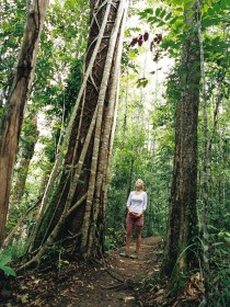 Wet Tropics - Accommodation Cairns