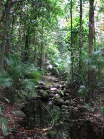 Mossman Gorge Rainforest Circuit Track Daintree National Park - Accommodation Cairns