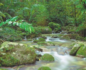 Mossman Gorge Daintree National Park - Accommodation Cairns