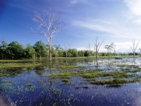 Tyto Wetlands - Accommodation Cairns