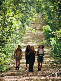 Wet Tropics Great Walk - Accommodation Cairns