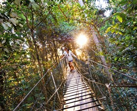 Tree Top Walkway - Accommodation Cairns