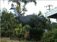 The Big Cassowary - Accommodation Cairns