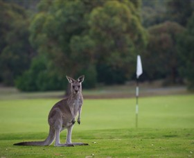 Anglesea Golf Club - Accommodation Cairns
