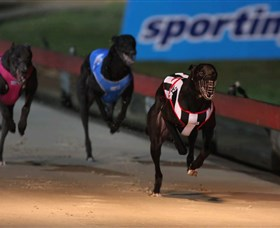 Dapto Dogs - Accommodation Cairns