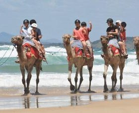 Camel Rides with Coffs Coast Camels - Accommodation Cairns