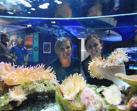 Solitary Islands Aquarium - Accommodation Cairns