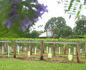 Douglas Vale Historic Homestead  Vineyard - Accommodation Cairns