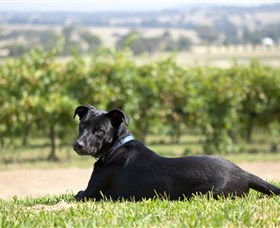 Moothi Estate Vineyard and Cellar Door - Accommodation Cairns