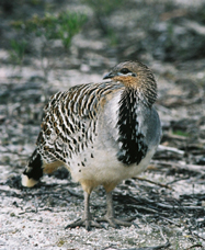 Yongergnow Australian Malleefowl Centre - Accommodation Cairns
