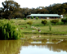 Clearview Alpacas - Accommodation Cairns