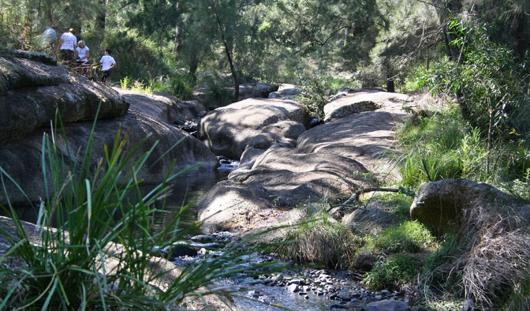 Towarri National Park - Accommodation Cairns