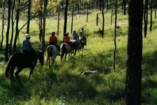 Hunter Valley Horse Riding and Adventures - Accommodation Cairns