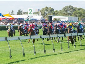 Morphettville Racecourse - Accommodation Cairns