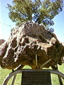 Fossilised Tree - Accommodation Cairns