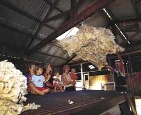 Shear Outback the Australian Shearers Hall of Fame - Accommodation Cairns