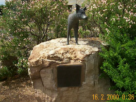 Dingo Statue - Accommodation Cairns