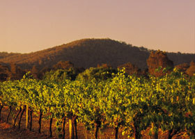Taltarni Vineyards - Accommodation Cairns