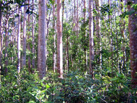 Cathu State Forest - Accommodation Cairns