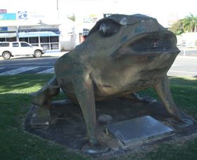 Big Cane Toad - Accommodation Cairns