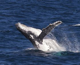 Whale Watching on Keswick Island - Accommodation Cairns