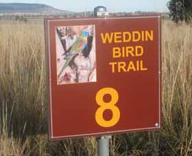 Weddin Bird Trails - Accommodation Cairns