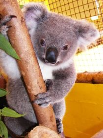 Cooberrie Park Wildlife Sanctuary - Accommodation Cairns