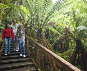 Otway Fly Treetop Adventures - Accommodation Cairns