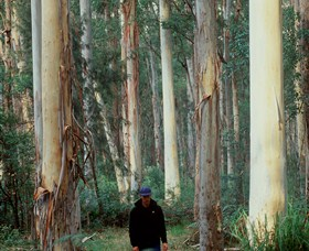 Blue Gum Forest - Accommodation Cairns