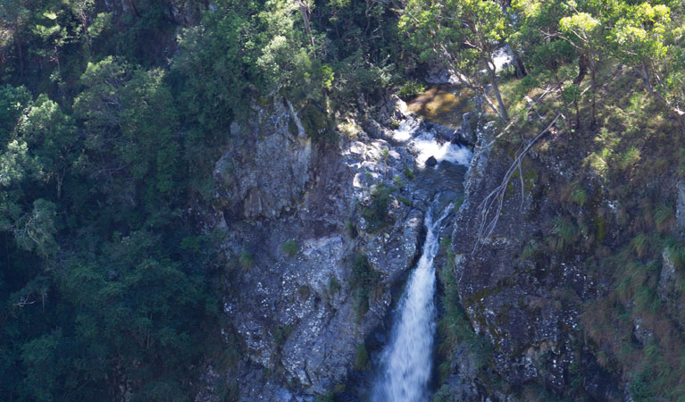 Lyrebird Falls walking track - Accommodation Cairns