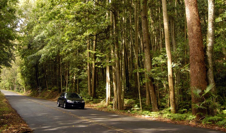 Greater Blue Mountains drive - Accommodation Cairns