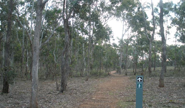 Green track - Accommodation Cairns