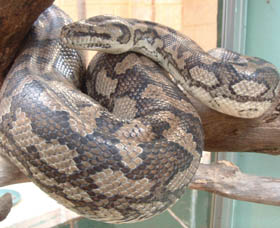 Armadale Reptile Centre - Accommodation Cairns